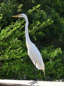 20130331 Easter Florida Boca Ratan Wakodahatchee Park 23