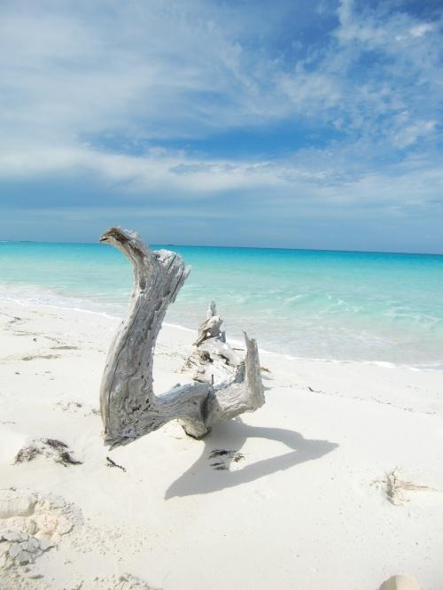20130421 Bahamas Shroud Cay 102