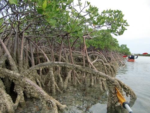20130421 Bahamas Shroud Cay 11