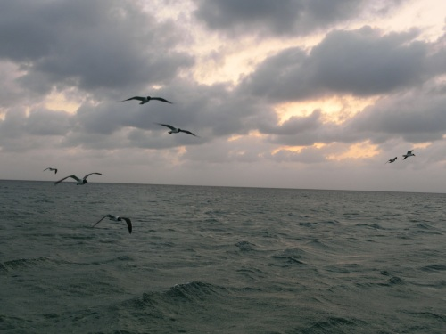 Birds come in to feed at dusk
