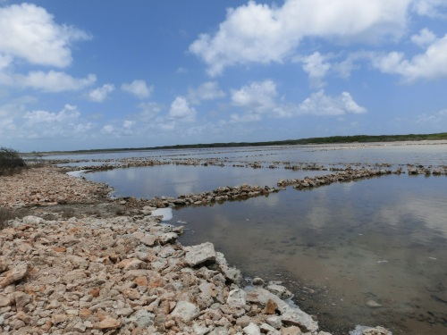 The Salt Ponds being reestablished after hurricane Sandy washed tons of  accumulated salt  away.